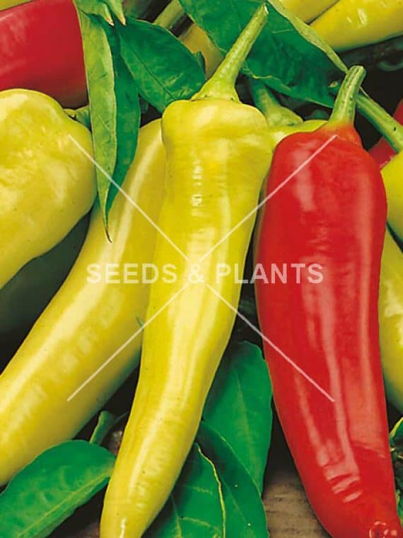 Hungarian Hot Wax Mild Pepper Seeds 5 Seeds Seeds And Plants