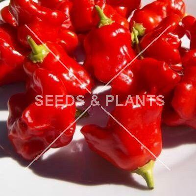 Mini Pickling Pepper