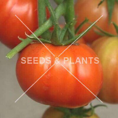 Heinz Tomato 1370
