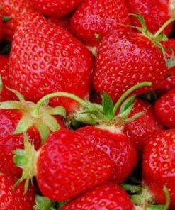Strawberry Fragissimo