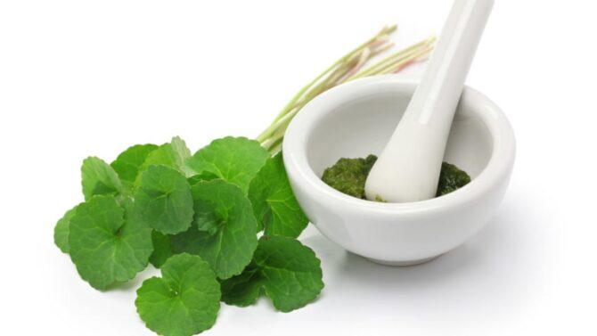Gotu Kola Medicinal Uses