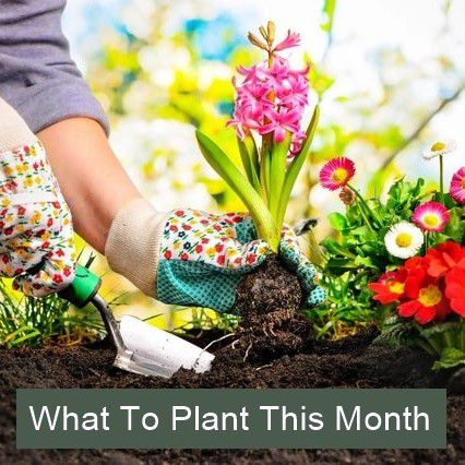 Sowing & Planting Calendar