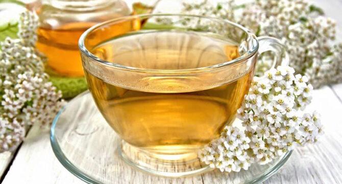yarrow medicinal uses