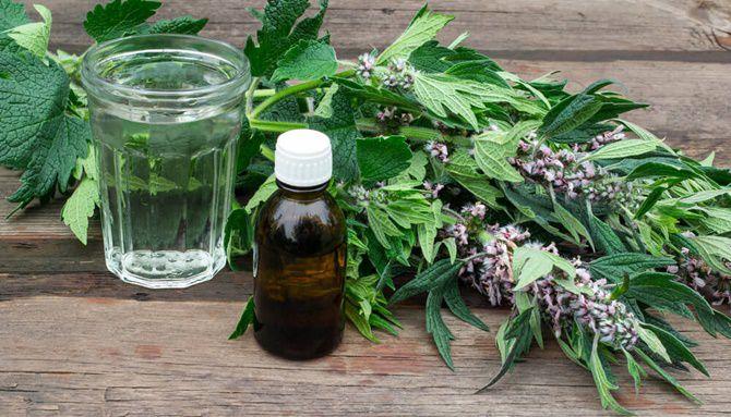 Motherwort Medicinal Uses