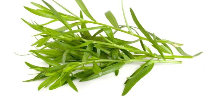 Tarragon Medicinal Uses