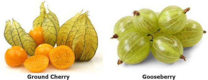 Ground Cherries versus Gooseberries